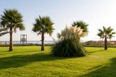 Arbeiten Sie mit Gras, Anlagen und Palmen im Garten. Stockbilder