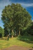 Arbeiten Sie mit hohen belaubten Bäumen, Rasen, Holzbank und blauem Himmel im Sonnenuntergang bei Weesp im Garten Lizenzfreies Stockfoto