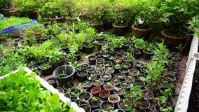 Arbeiten Sie mit vielen Baumtöpfen im garten, die die Sprösslinge haben, die herein gepflanzt werden Lizenzfreie Stockfotos
