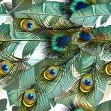 Arbeiten Sie tropisches Muster mit realistischen Pfaufedern und -verbot um Stockfotos