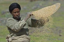 Arbeitende äthiopische Frau Lizenzfreies Stockbild