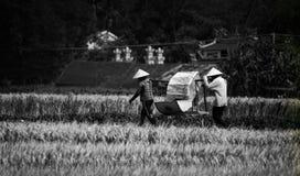 Arbeitende asiatische Leute Lizenzfreies Stockbild