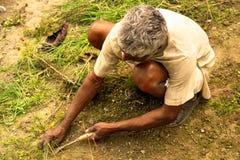 Arbeitendes Ausschnittgras des alten Mannes in ländlichem nordöstlichem Indien Stockfoto