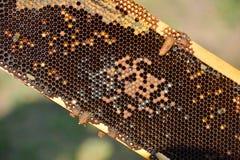 Arbeitsbienen auf Holzrahmen Stockfotografie