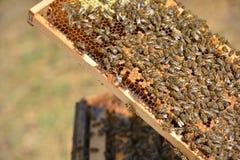 Arbeitsbienen auf Holzrahmen Lizenzfreie Stockfotos