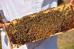 Arbeitsbienen auf Holzrahmen Lizenzfreie Stockfotografie