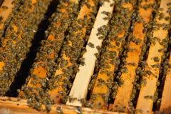 Arbeitsbienen auf Holzrahmen Stockfotos
