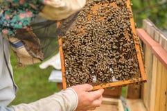 Arbeitsbienen in den Bienenwaben Gesunde Nahrung Lizenzfreies Stockfoto
