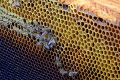 Arbeitsbienen im Bienenstock Lizenzfreie Stockfotografie
