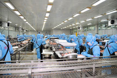 Arbeitskräfte arbeiten in einer Verarbeitungsanlage der Meeresfrüchte für den Export der Garnele Lizenzfreie Stockfotografie