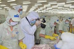 Arbeitskräfte arbeiten in einer Verarbeitungsanlage der Meeresfrüchte in Tien Giang, eine Provinz im der Mekong-Delta von Vietnam Stockbilder