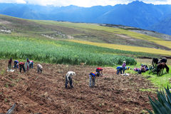 Arbeitskräfte auf dem Gebiet nahe Maras in Peru stockfotografie