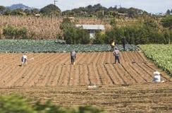 Arbeitskräfte auf einem Gebiet in Guatemala lizenzfreies stockbild
