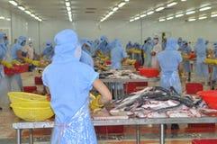 Arbeitskräfte beinen pangasius Fische in einer Verarbeitungsanlage der Meeresfrüchte in Tien Giang, eine Provinz im der Mekong-De Stockbilder