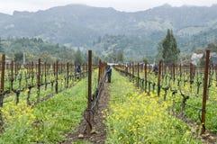 Arbeitskräfte, die Weinrebereben in Kalifornien neigen lizenzfreies stockfoto