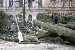 Arbeitskräfte säubern den gefallenen Baum lizenzfreies stockbild