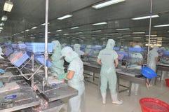 Arbeitskräfte sind Ausbeinen von pangasius Wels in einer Verarbeitungsanlage der Meeresfrüchte in An Giang, eine Provinz im der M Stockbild