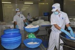Arbeitskräfte wiegen pangasius Fischfilets in einer Verarbeitungsanlage der Meeresfrüchte in Tien Giang, eine Provinz im der Meko Stockfotografie