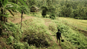 Arbeitskraft auf den Reis-Gebieten stockfotografie