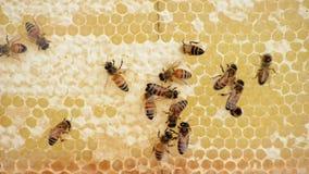 Arbeitskraft-Bienen und Honig stock footage