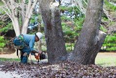 Arbeitskraft, die einen Baum mit Kettensäge schneidet Stockfotos