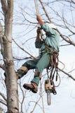 Arbeitskraft, die oben in einen Baum hochgezogen wird Stockfotografie