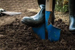 Arbeitskraft gräbt den schwarzen Boden mit Schaufel im Gemüsegarten Stockfotos