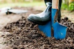 Arbeitskraft gräbt den schwarzen Boden mit Schaufel im Gemüsegarten Lizenzfreies Stockfoto