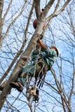 Arbeitskraft mit der Kettensäge, die einen Baum steigt Lizenzfreie Stockfotografie