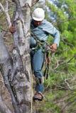 Arbeitskraft mit der Kettensäge, die einen Baum steigt Lizenzfreies Stockbild