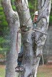 Arbeitskraft mit der Kettensäge, die einen Baum schneidet Lizenzfreies Stockbild