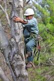 Arbeitskraft mit der Kettensäge, die einen Baum steigt Stockbild