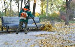 Arbeitskraft säubert oben gefallene Blätter mit Rucksackgebläse Stockfotos