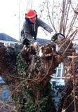 Arbeitskraft schneidet Baumaste Lizenzfreies Stockbild