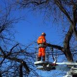 Arbeitskraft schneidet die getrockneten Niederlassungen Stockbilder