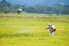 Arbeitskraft sprüht Düngemittel auf dem Reisgebiet Lizenzfreie Stockfotos