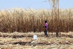 Arbeitskraftmann im Zuckerrohrbauernhof, im Zuckerrohrplantagenbrand und in der Arbeitskraft, Zuckerrohrplantagen bewirtschaften, lizenzfreie stockbilder