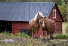 Arbeitspferde Stockfoto