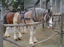 Arbeitspferde Stockfotos
