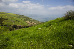 Arbel moutain meadow. Moutain meadow in spring at Arbel mountain Israel Stock Image
