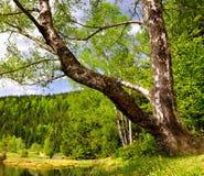 arber λίμνη σημύδων μικρή Στοκ εικόνα με δικαίωμα ελεύθερης χρήσης