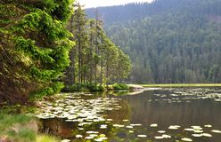 arber arbersee巴伐利亚更总的湖 免版税图库摄影