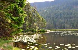 arber arbersee bavaria jezioro Fotografia Royalty Free