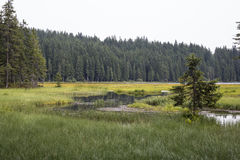 Arber. Small Arber Lake in National Park Bavarian Forest - Germany Stock Photography