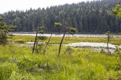 Arber. Small Arber Lake in National Park Bavarian Forest - Germany Stock Image