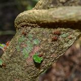 Arbeta för myror Arkivfoton
