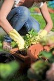 arbeta i trädgården Royaltyfria Foton