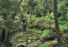 Arbeta i trädgården i Bali med dammet och palmträd i djungeln Royaltyfria Foton