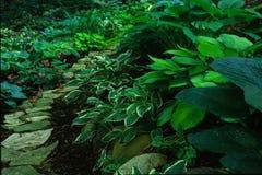 arbeta i trädgården banan Fotografering för Bildbyråer