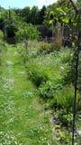 arbeta i trädgården banan Arkivbild